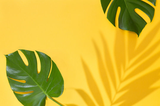 Top view of green tropical leaves Monstera and Areca on yellow background. Flat lay. Summer concept with palm tree leaf, copyspace. Vacation, holiday, travel, sun background