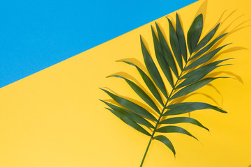 Top view of green tropical leave Monstera on blue and yellow background. Flat lay. Summer concept with palm tree leave, copyspace