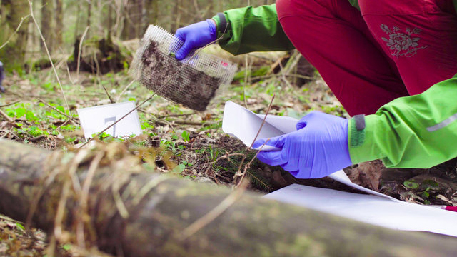 Close up woman's hands in protective gloves. Scientist ecologist in the forest taking sample of the ground and putting it in a paper envelope.