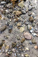 Textur für Naturstrand mit Steinen