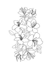 Hand sketch composition of rhododendron Ledebour. black line art of flowers on white background. Isolated composition of maralnik for postcard, print, decoration, backgrond. endemic of Altai Mountains
