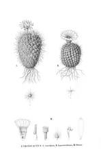 Illustration of cactus.