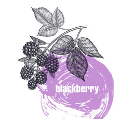 Realistic illustration of apple blackberry isolated on white background.
