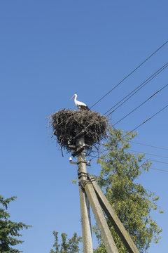 Stork's nest on the power line