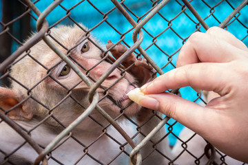 The girl is feeding a monkey in a cage at Thu Le zoo