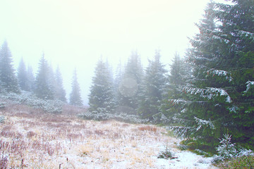 Mountain forest in dense fog after first snow. Evergreen forest
