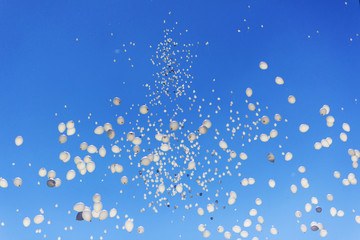 bunch of helium balloons fly high in the blue sky