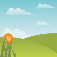 Meadow and flower vector illustration
