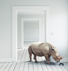 Rhino in the room.