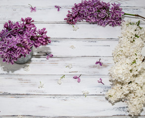 Flowers of lilac.White old background with space for text.Purple color.