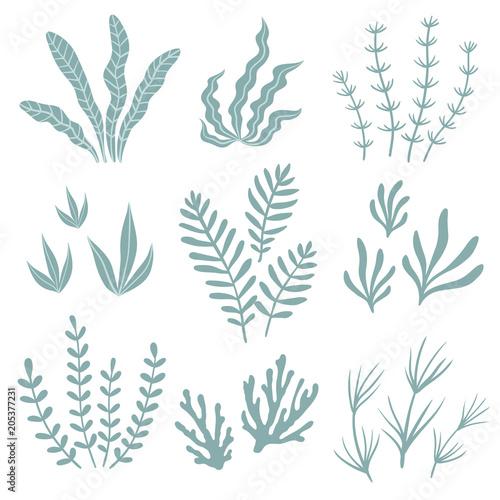 Set of seaweed. Vector illustration.\