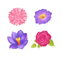 Flowers Set Poster Decor, Vector Illustration