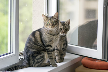 Two funny cute marble striped tabby cats sitting on the windowsill in the window