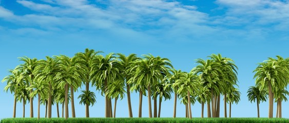 Palm trees, beautiful tropical background, 3d rendering