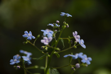 small blue flowers in sunny day