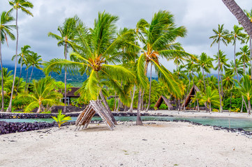 Huts Under the Shade of Coconut Palm Trees