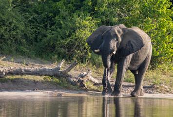 Elephant along the river