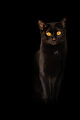 Background Black cat yellow flame eyes on black background