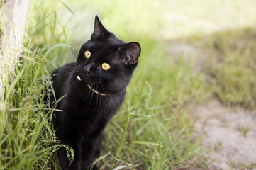 Black cat looks at the green grass in the garden