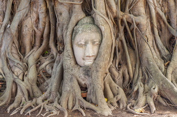 Large stone Buddha head in fig tree roots, Wat Mahathat, Ayutthaya City, Thailand, Southeast Asia, Asia.