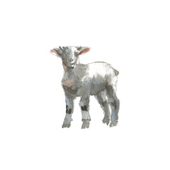The Lamb portrait