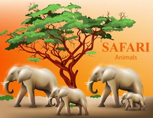 Elephants safari background Vector illustration
