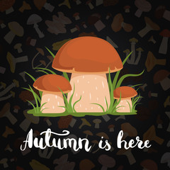 Vector background with cartoon mushrooms and lettering
