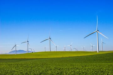Field Of Three Bladed Energy Producing Windmills