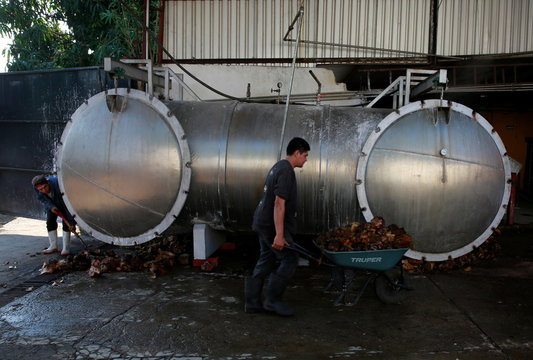 An employee carries cooked hearts of blue agave next to an oven at Don Blanco distillery in Tequila