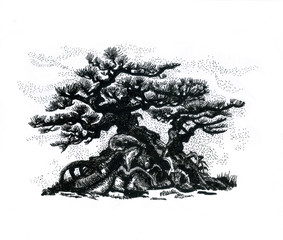 Eastern coniferous bonsai.