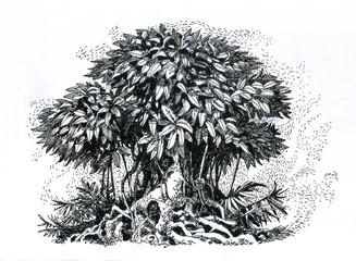A beautiful tree, a drawing.