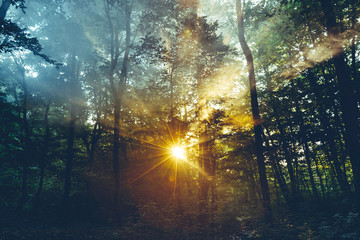 Morning Sunlight Rays Makes Way Through The Threes Leaves And Mist. Nature Landscape