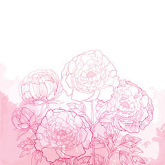 Vector composition with outline peony flower bunch, bud and ornate leaves on the textured pink background. Bouquet of contour pink peonies for summer design.