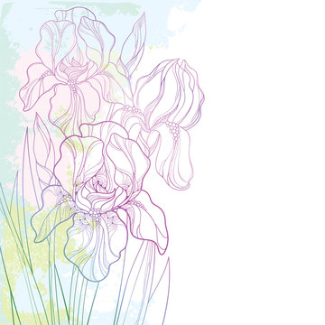 Vector corner composition with outline bouquet of pink Iris flower, bud and leaf on the textured pastel background. Ornate contour bunch of Iris for greeting spring or summer design.