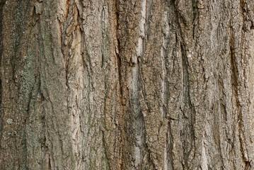 Photo sur Aluminium Texture de bois de chauffage gray texture of a wooden bark on a tree