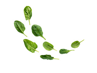 Flying heap of green spinach leaves