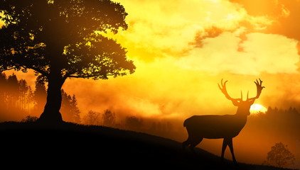 Lone deer at sunset