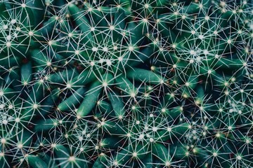 mexican typical plant summer pattern, green cactus, aloe, succulent