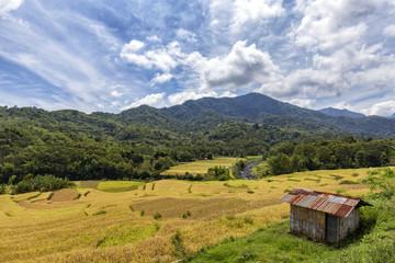 Rice terraces near Kelimutu National Park in East Nusa Tenggara, Indonesia.