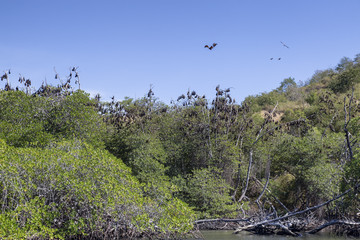 The nesting area of large fruit bats in the Seventeen Island National Park in East Nusa Tenggara, Indonesia.