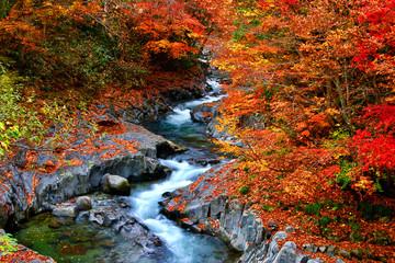 秋の中津川渓谷(猪苗代町・北塩原村)