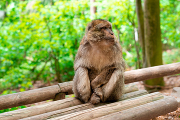 Funny monkey sitting in tropical forest