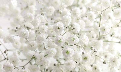 Floral beautiful light background. Small white flowers. Flowers Gypsophila. Wall mural