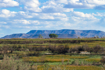 This scrubby wetland is part of Alamosa National Wildlife Refuge in southern Colorado