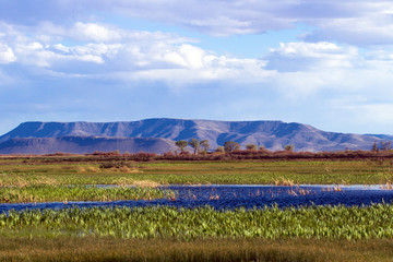 The beautiful marsh in Alamosa National Wildlife Refuge at the edge of the Sangre de Cristo Mountains in southern Colorado