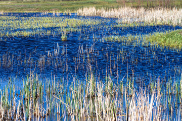 Closeup of ripply water and emergent grasses in the beautiful marsh at Alamosa National Wildlife Refuge in southern Colorado