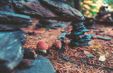 Wild Mushrooms in the forest in autumn