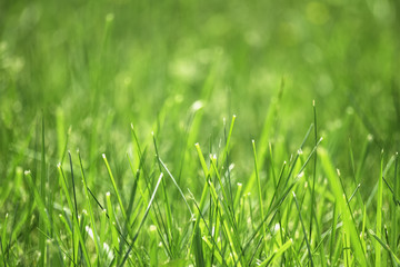 field of green grass with blurred background