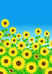 元気いっぱいに咲いた!満開のひまわり畑