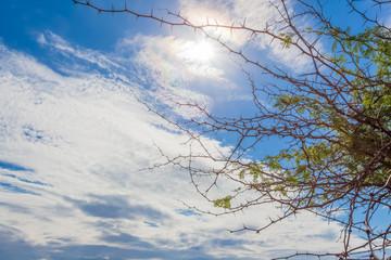 buisson épineux sur fond de ciel bleu